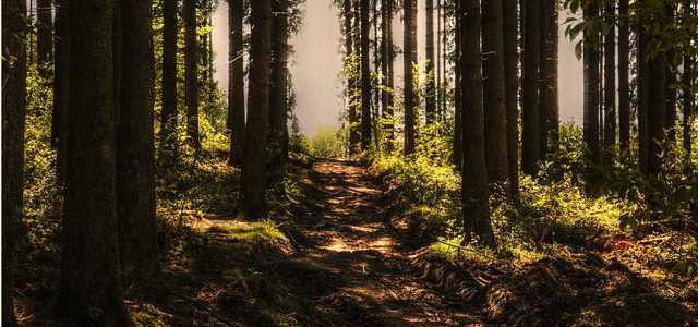 Down the Path on The Way of Discipleship